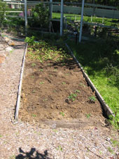Bed 0 planted with tomatos and string beans