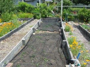 Bed 5 -Before Planting